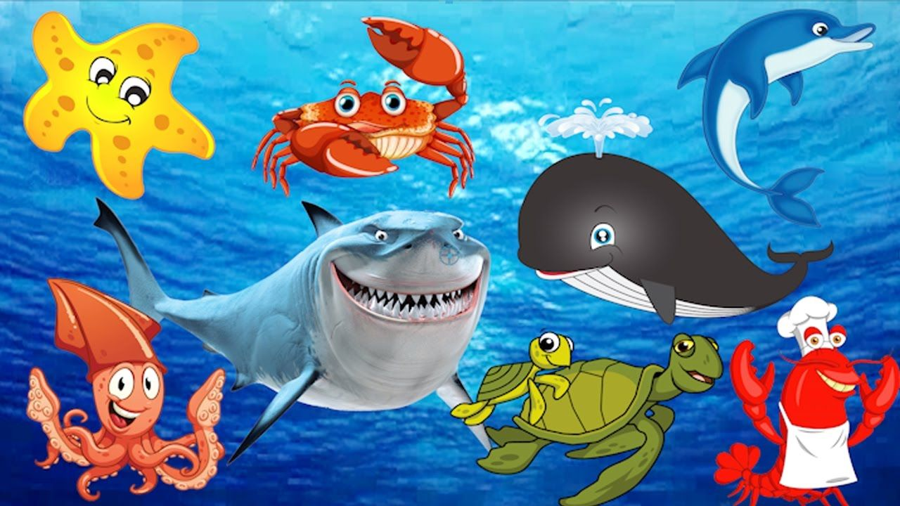 Learning Sea Animals Names Water Ocean for Children Real