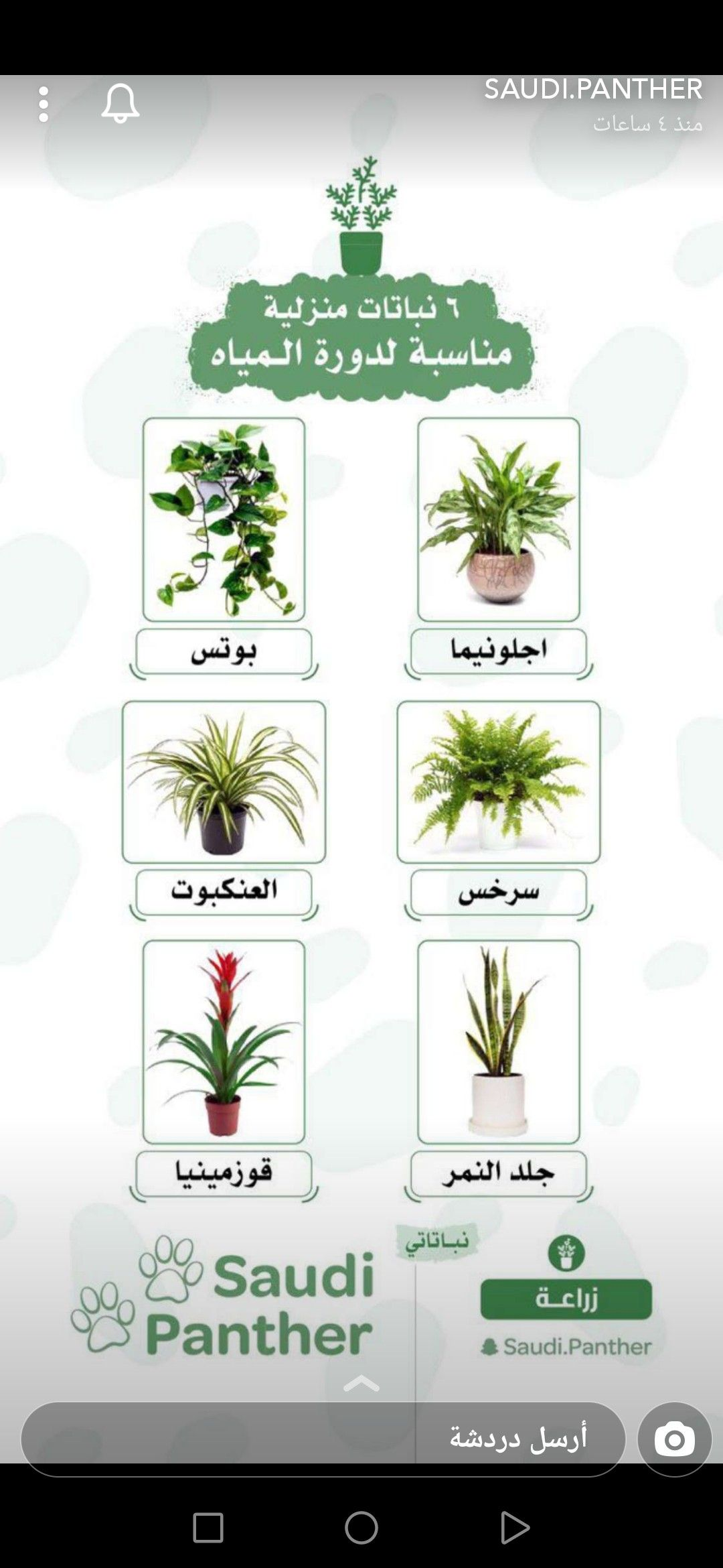 Pin By Sana Azhary On Interior Designs And Furniture House Plants Decor House Plants Best Indoor Plants