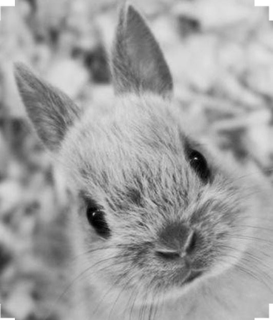 Pin by Justine Buckland on Bunnys | Cute bunny pictures ...