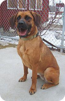 Golden Retriever Boxer Mix Looks Like My Dog W Floppy Ears
