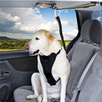 Pin By Sandra Levar On Things I Like Dog Seat Belt Dog Belt Dogs