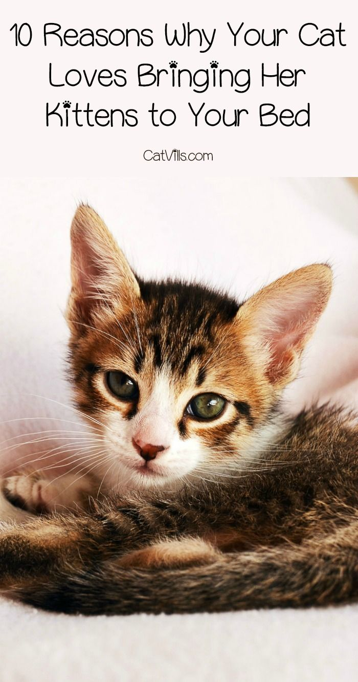 Why Does Your Cat Keep Bringing Her Kittens To Your Bed There Are Actually A Few Good Reasons Check Out The Reason Behind This Cat Behavior
