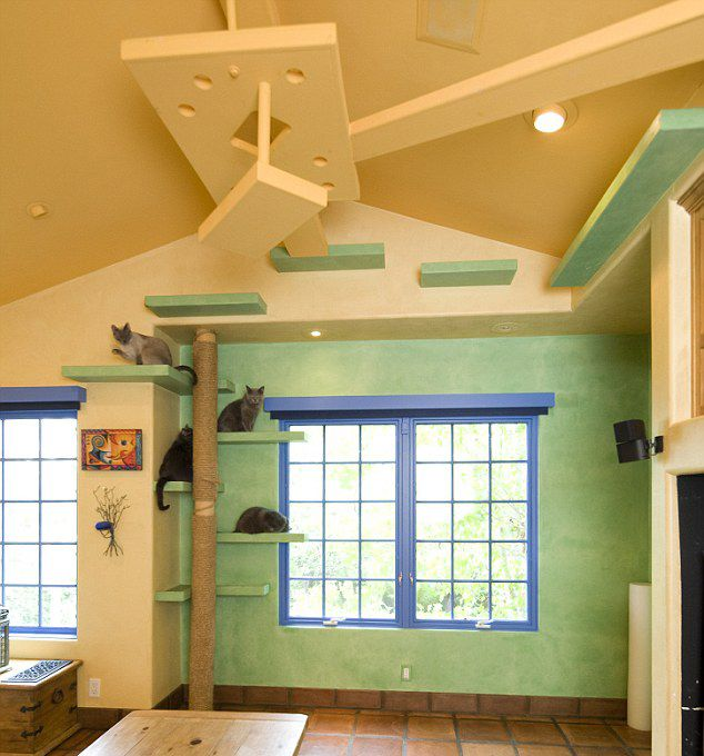 Crazy Home Modifications For Devoted Pet Owners | Blog | myWebRoomCrazy Home Modifications For Devoted Pet Owners | Blog | myWebRoom