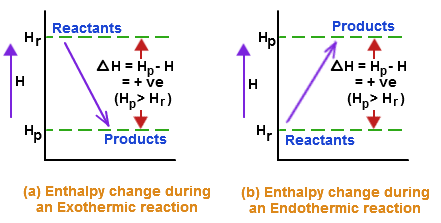 Hell endothermic exothermic essay