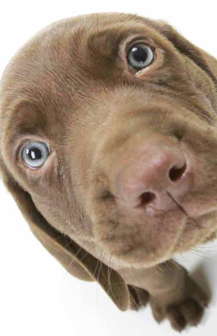 Unique Dog Names - Unusual Puppy Names For Your Boy | Chocolate ...