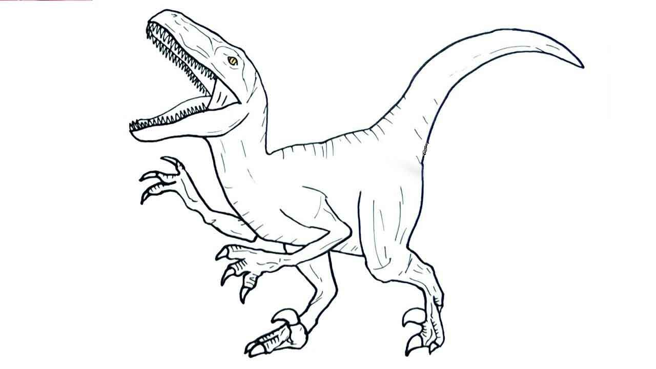 9 Top Raptor Coloring Pages In 2021 Velociraptor Drawing Coloring Pages Blue Jurassic World