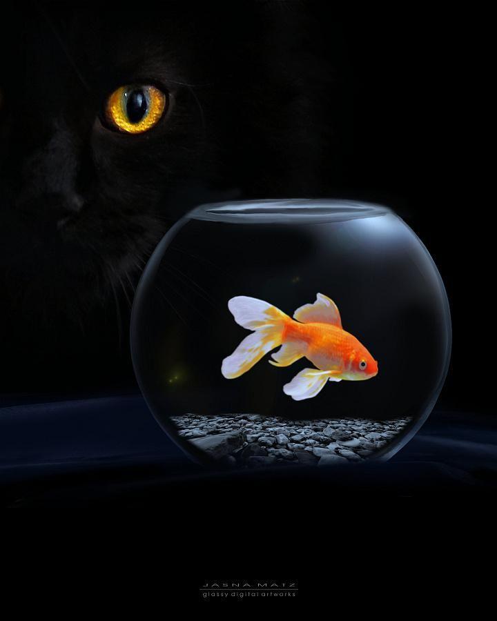 Fotografia On Black Cat Cat Photography Goldfish