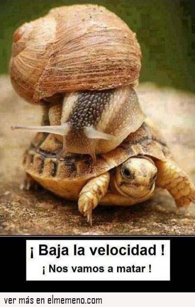 151e31a2e97ff12a83e265cd05270b75 rápido y furioso funny animals pinterest animal, turtle and