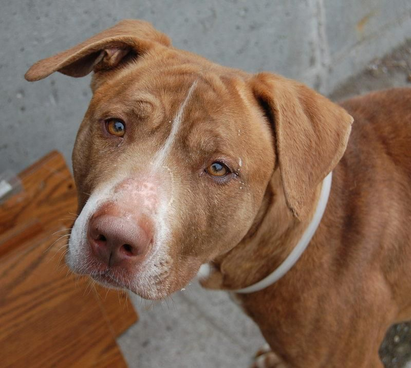 TO BE DESTROYED 3/27/13 Brooklyn Center P My name is