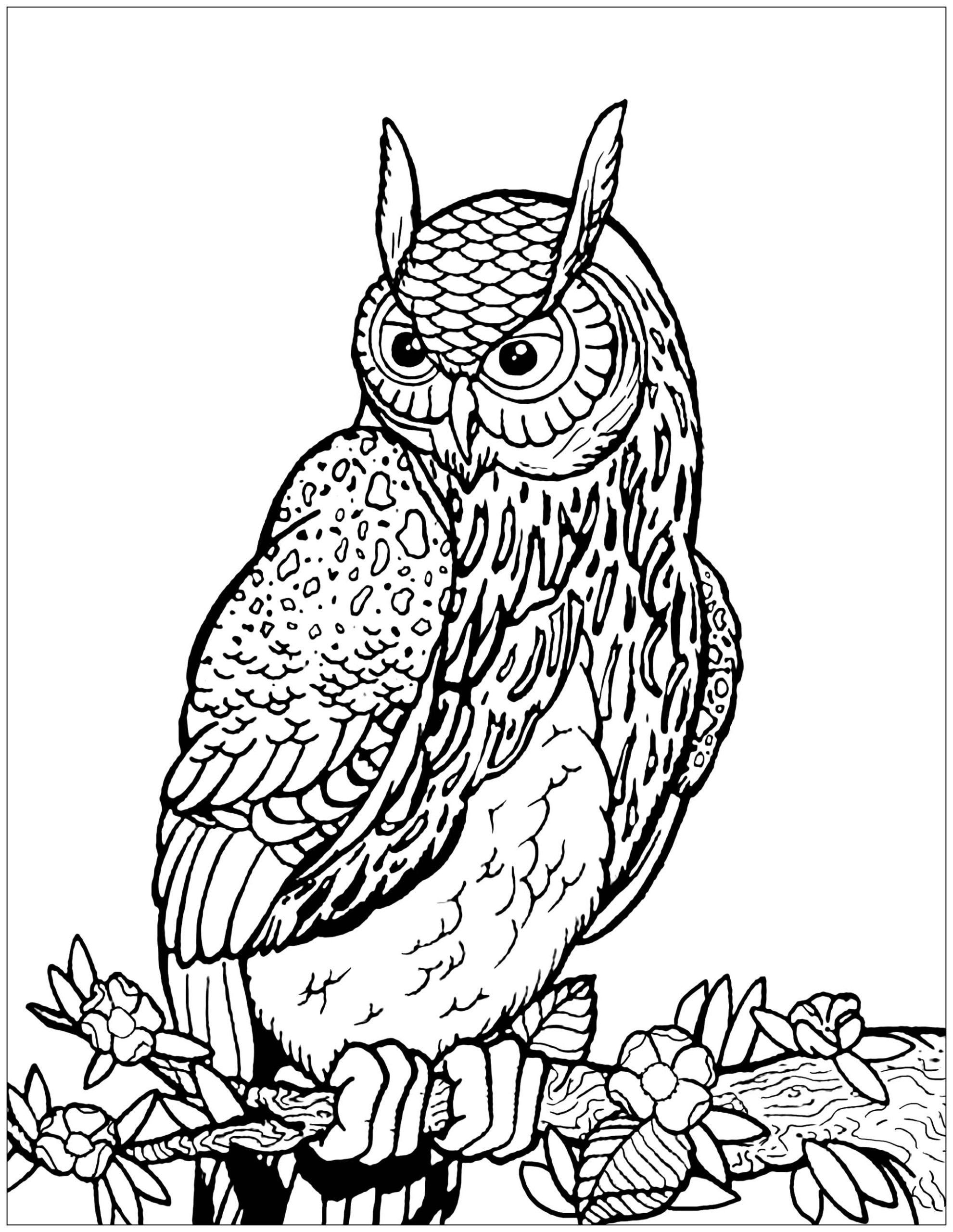 Coloring Picture Of Owls Coloring Pages Owls To For Free Kids Coloring Owl Ideas In 2020 Owl Coloring Pages Tree Coloring Page Coloring Pages