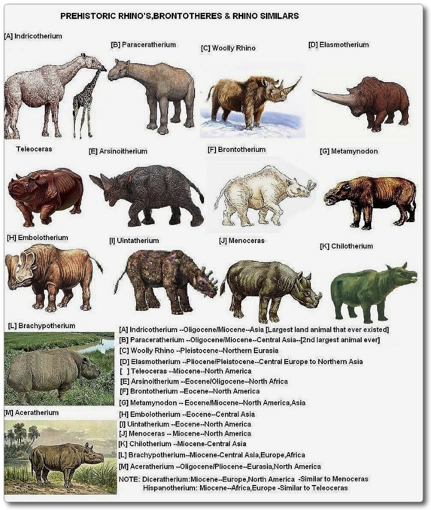 Species Evolution Chart