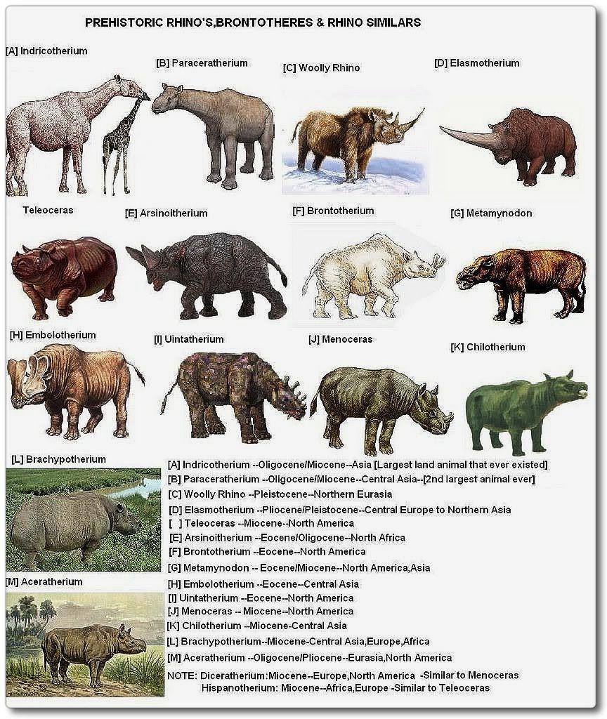 Species evolution chart | dinosaurios | Pinterest ...