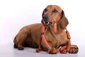 Homemade Dog Food For Diabetic Dachshunds
