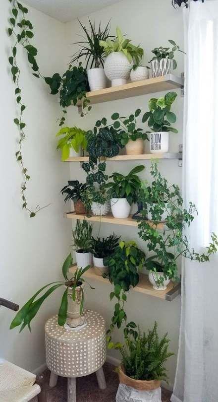 70+ Trendy Plants Indoor Design Interiors Shelves -   16 cute planting Room ideas
