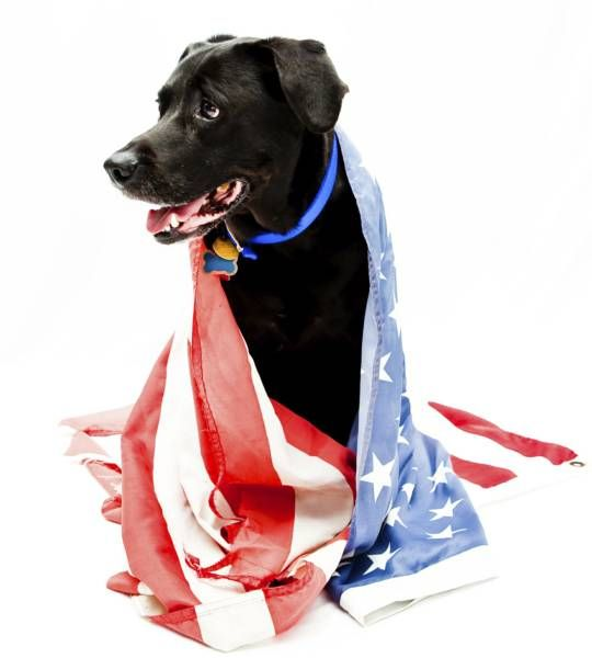 Paws For Veterans Provides Psychiatric Service Dogs Training And