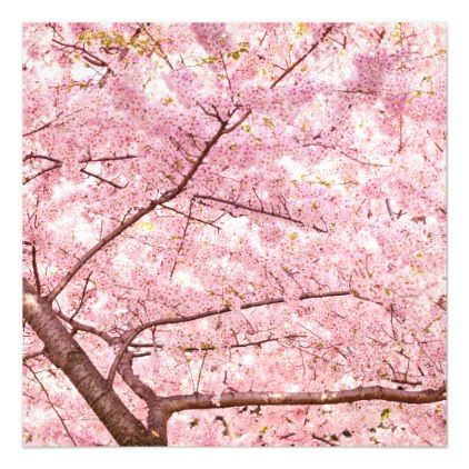 Cherry Blossom Trees Magnetic Card Invitations Custom Unique Diy Personalize Occasions Blossom Trees Cherry Blossom Tree Tree Wall Decal