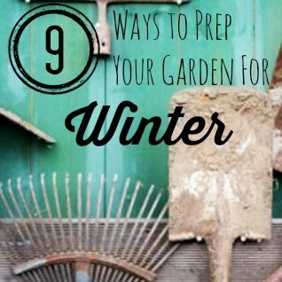 Use our expert fall garden cleanup tips now for a more productive garden in the spring.