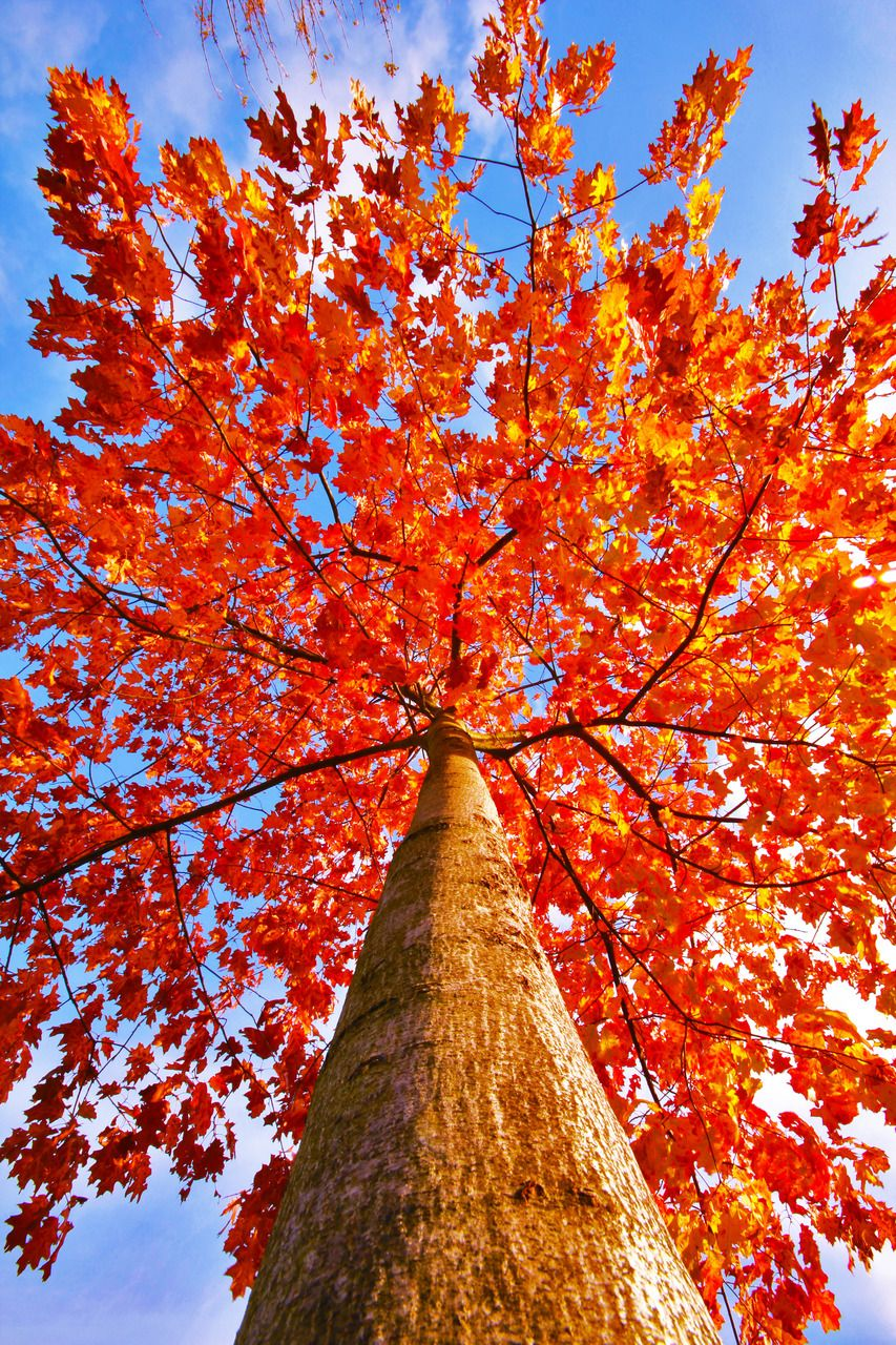 Looking Up Into Autumn In 2019