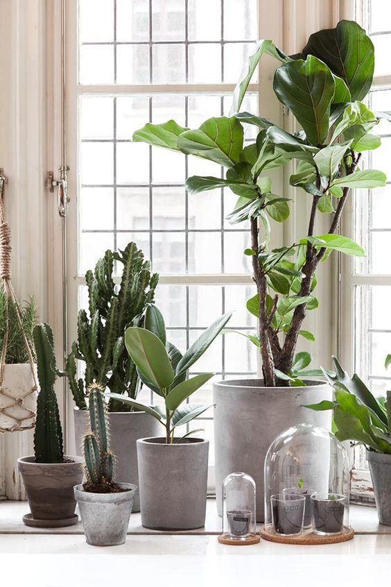 Kwiaty Doniczkowe I Ziola W Domu Pomysly I Inspiracje Fajna Strona Plant Decor Indoor Artificial Plants Indoor Interior Plants