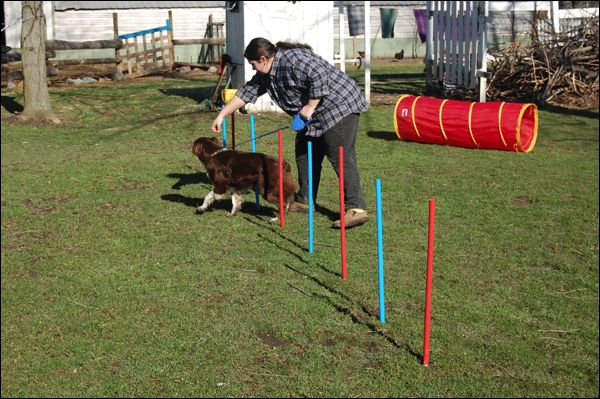 Homemade Dog Agility Course The Mobile Home Woman Dog Agility