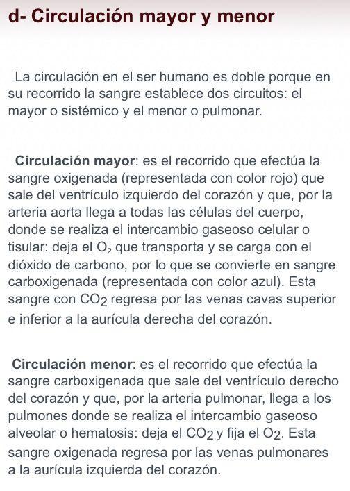 Recorrido De La Circulacion Mayor Y Menor Circulacion Mayor Circulacion Circulacion Sistemica