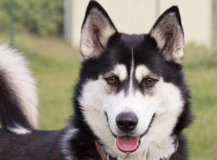Luna Find A Pet Rspca Org Uk Dog Id Dog Games Pets