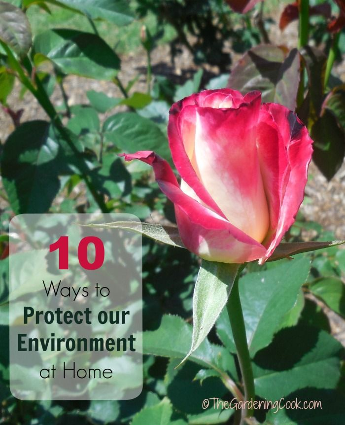 These 10 simple steps will go a long way towards your plan to protect our environment. Let's make EVERY Day Earth Day! thegardeningcook.com #madetomatter #ad
