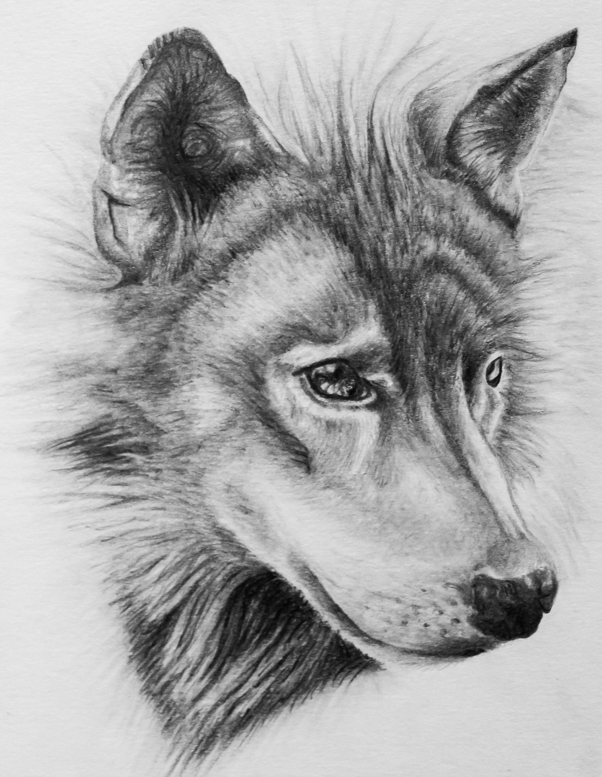 всех современных картинки волки черно-белые карандаш обои
