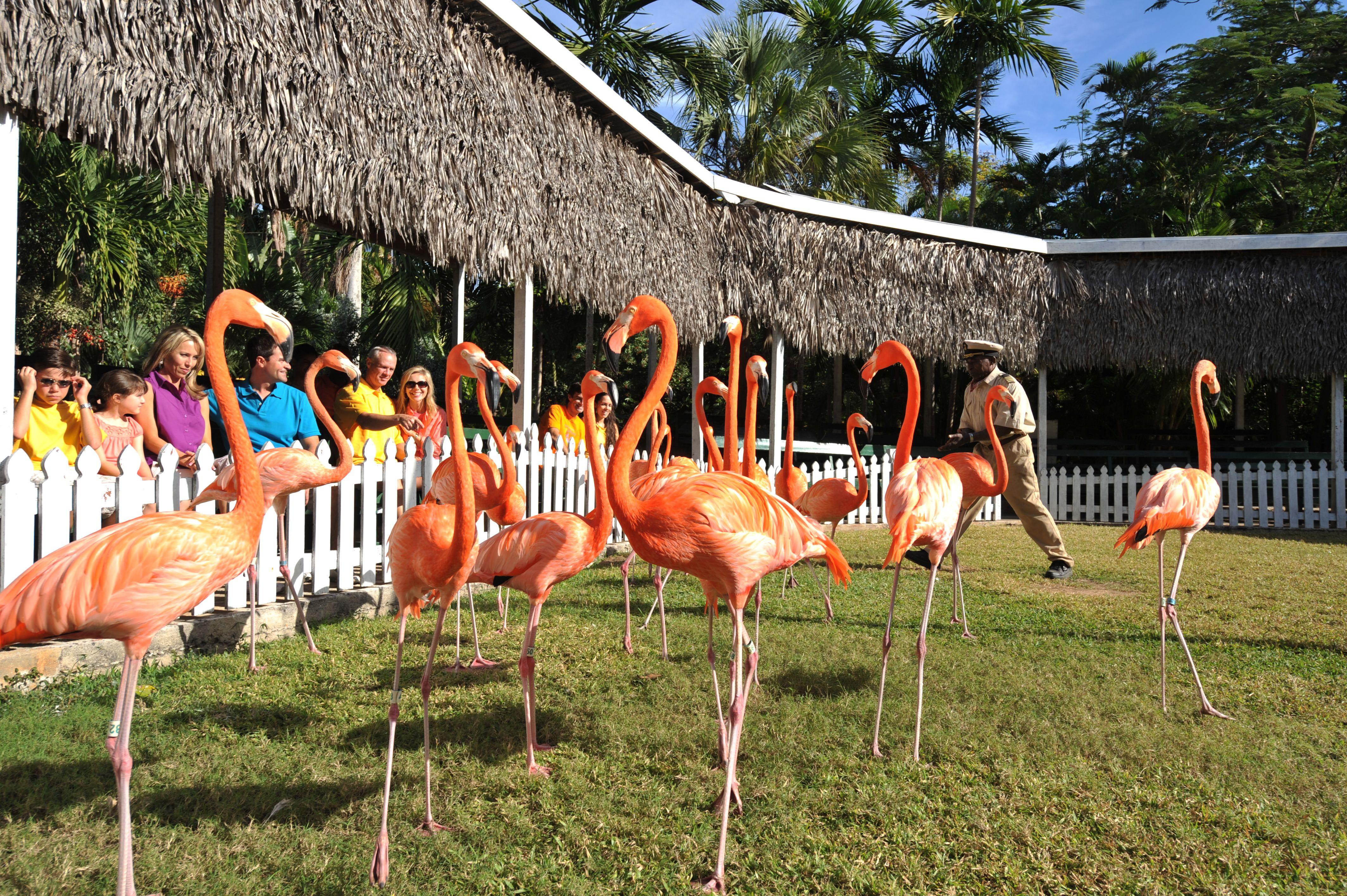 1523400a4d4d89ef82d867735cd04da4 - Nassau Bahamas Ardastra Gardens And Zoo