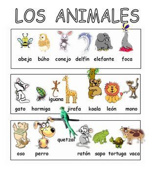 40 large, colorful Spanish animals cards for young children ...