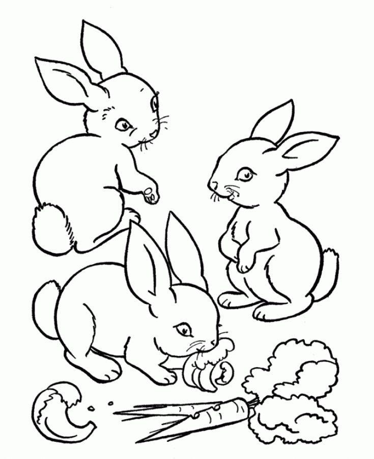 Three Rabbits Eating Carrots Coloring Pages
