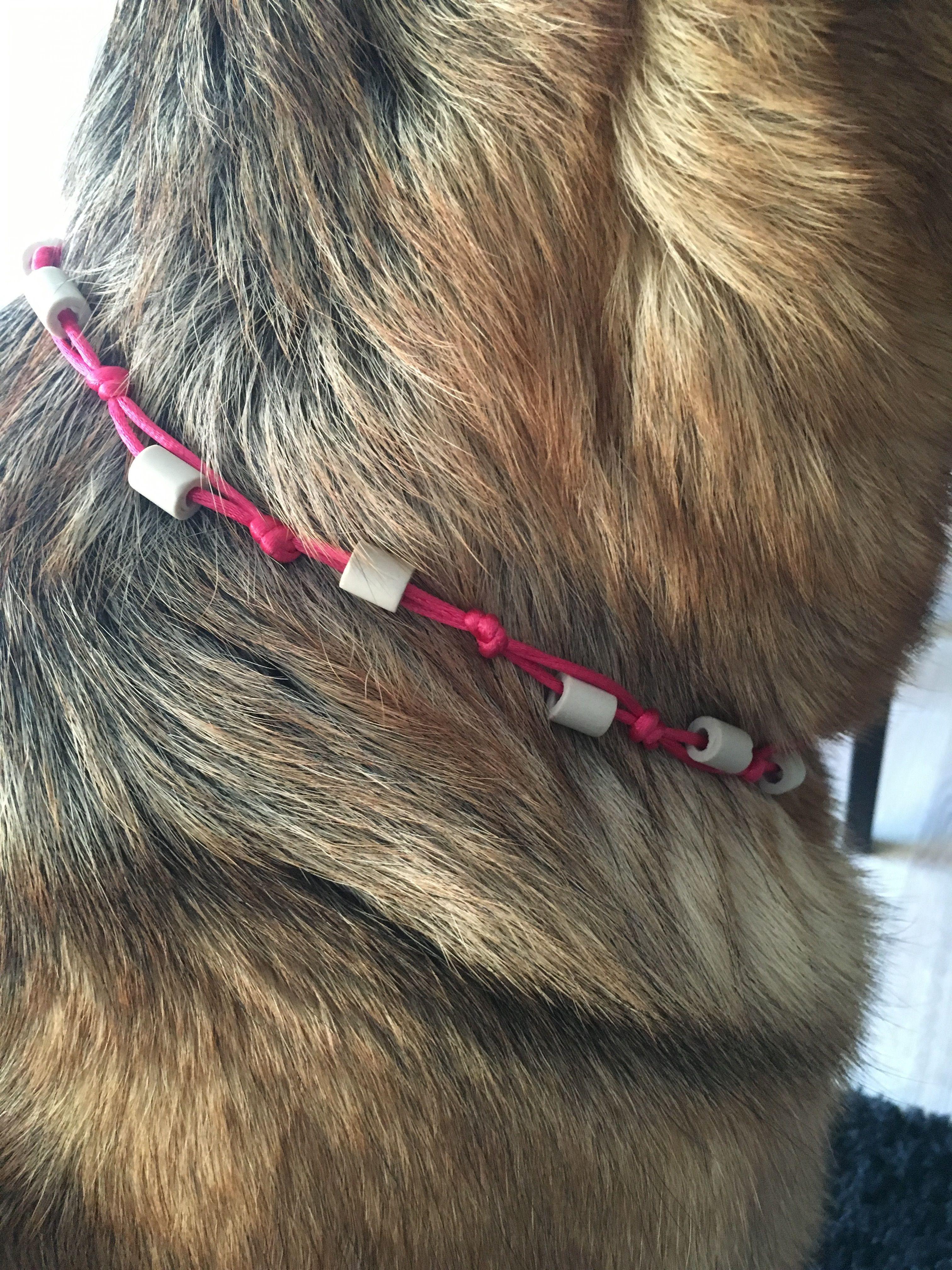 Wir Haben Em Keramik Halsbander Gegen Zecken Getestet Und Berichten Euch Heute Von Unseren Erfahrungen Die Wir I Em Keramik Halsband Zecken Tricks Fur Hunde