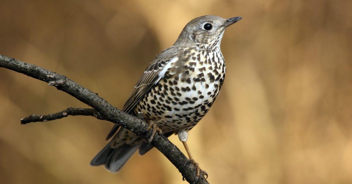 Nieuw Vogels In De Tuin Herkennen: 27 Tuinvogels & Info (met YT-78