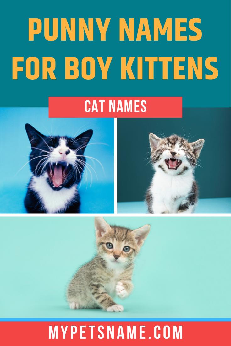 Boy Cat Pun Names In 2020 Cat Puns Cat Pun Names Cats