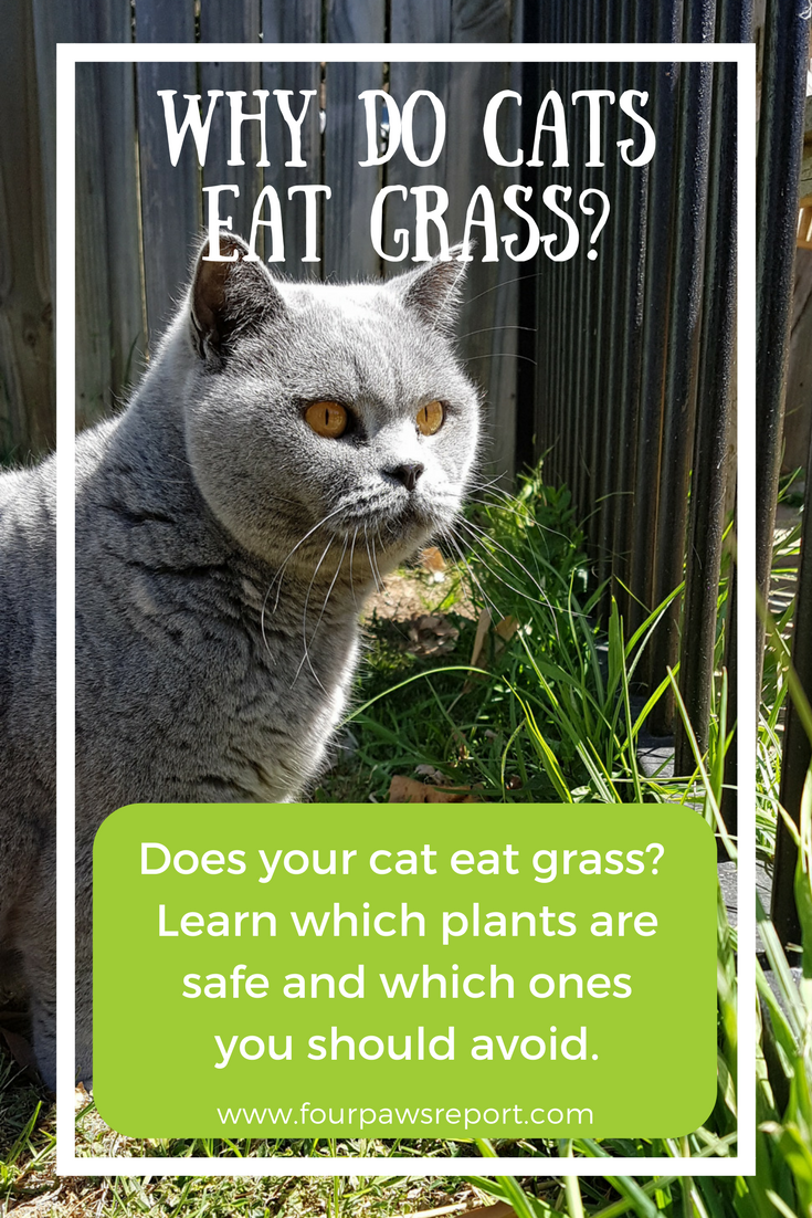 Why does my cat eat grass and is this OK? Cat plants