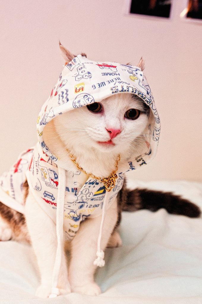 Hiphop Cat Is Searching For The Mic By Dat My Glass Eyed Pet Is