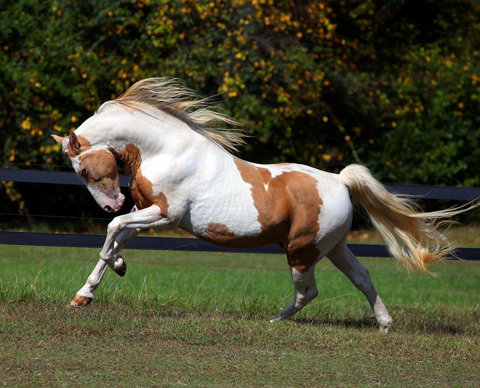 Chestnut Horse Wallpaper 1080p 8og Horses Horse Wallpaper