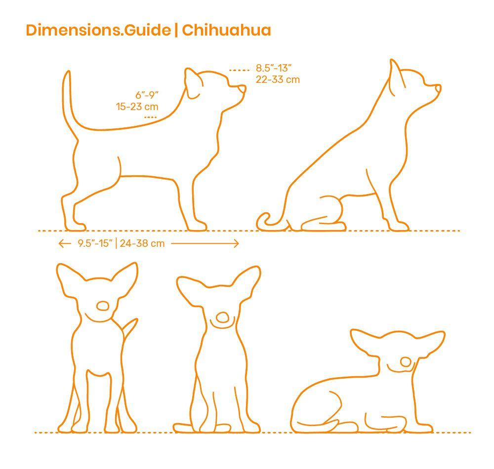 Chihuahua Dog Anatomy Chihuahua Chihuahua Drawing [ 950 x 1000 Pixel ]