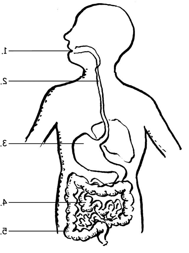 Coolest Human Digestive System Coloring Sheets Coloring Alifiah Biz Coloring Pages Human Digestive System Creation Coloring Pages