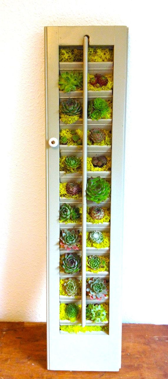 Succulent Vertical Garden in Vintage Window by LoliviaGifts, $75.00