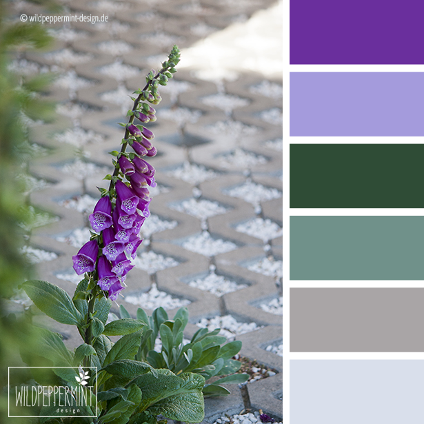 farbpalette fingerhut violett gr n grau wildpeppermint design. Black Bedroom Furniture Sets. Home Design Ideas