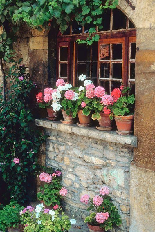 Geraniums in aged terra cotta pots on a window sill