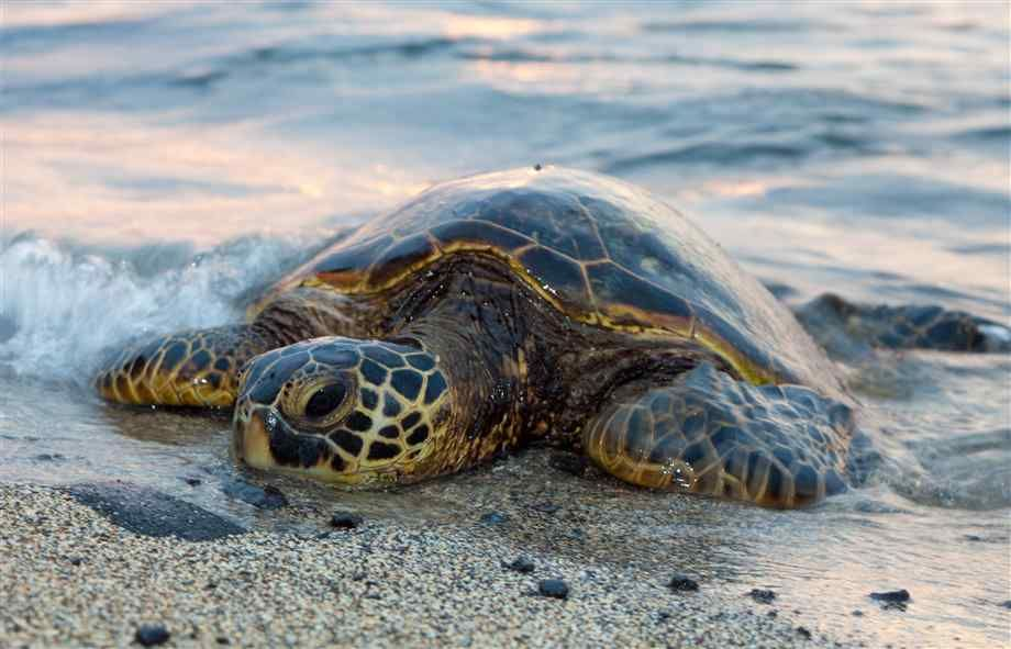 Image result for sea turtle on beach