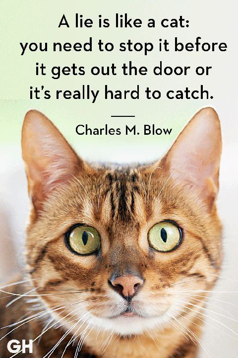 Charles M. Blow Cat Quotes Funny Cat Quotes funnycat