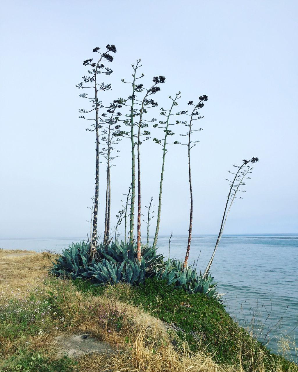 Carex: Garden Design By Carolyn Mullet