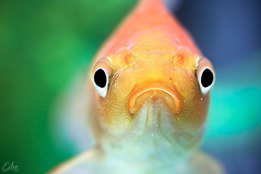 Вечера отличного, картинки рыб смешные