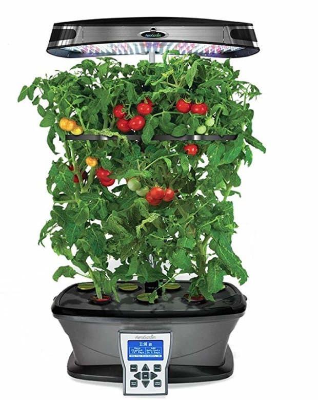 The Best Indoor Herb Garden In 2020 With Images Indoor 400 x 300