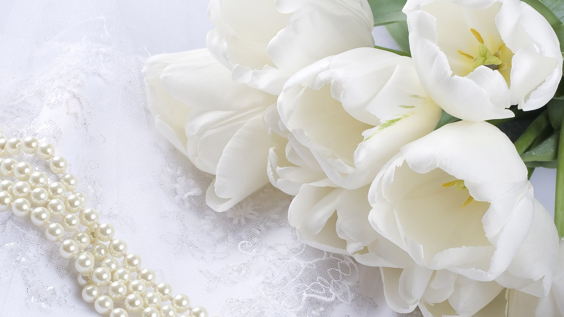 White Rose Wallpapers HD Pictures Flowers One HD Wallpaper ...