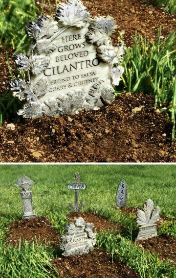 Herb Graveyard #herbsgarden