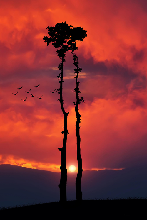 .nature